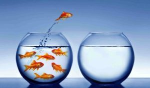 Read more about the article MANAGING THE TRANSITION WITH YOUR OWN BUSINESS